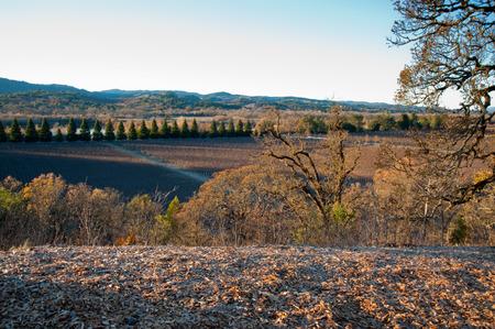 Vineyard in Sonoma California Standard-Bild