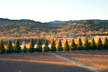 sonoma: Vineyard in Sonoma California Stock Photo