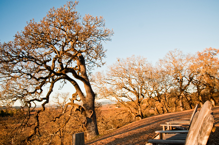 View of Sonoma County, CA