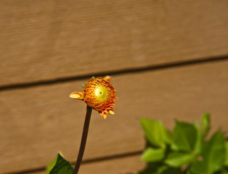 Sunlit flower in a garden