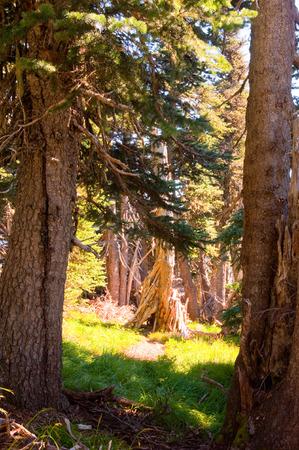 Sunlit trees in a forest Standard-Bild