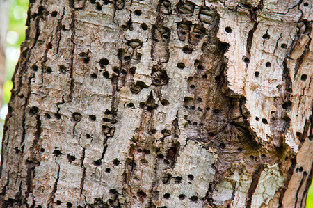 Tree bark with insect holes Standard-Bild