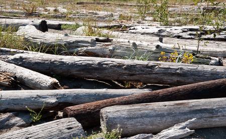 Driftwood on Bainbridge Island beach Standard-Bild