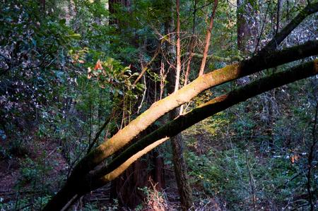 Sunlit tree branch