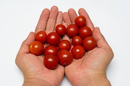Small cherry tomato close up in the hands
