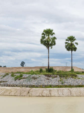 catchment: Two palms on the catchment Stock Photo