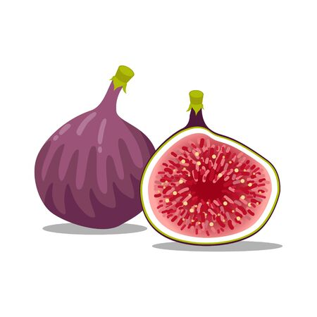 Vector of fresh and half cut slice figs on isolated on white background. Collection