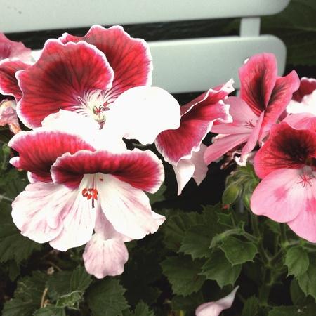 Roze bloemen op de witte bank