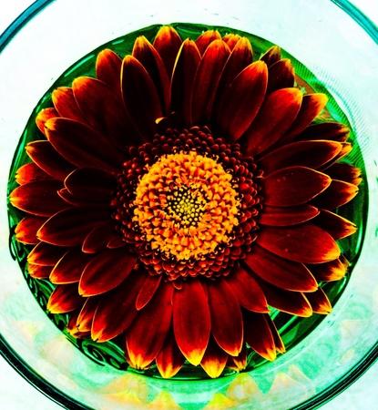 bloem verschillende filters