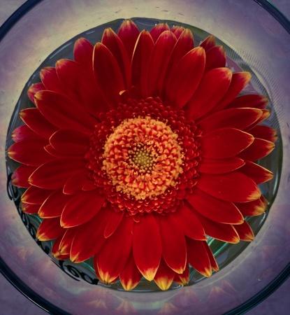een bloem verschillende filters Stockfoto