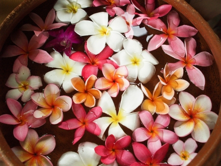Colorful Frangipani floating in a bowl of water Stock Photo