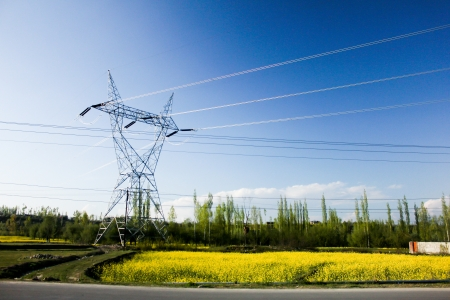 Mustard field and electric pillars in a sunny day
