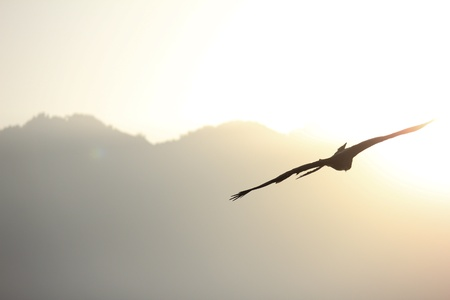 bird flying with mountain background and morning sunlight photo