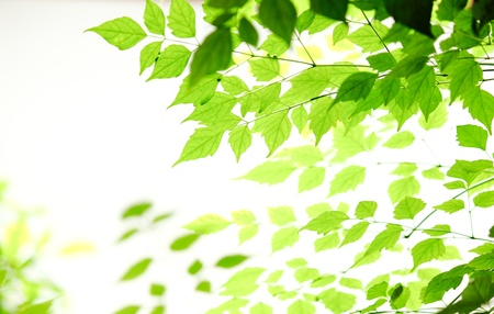 Diffent shade of green leaves on white background photo