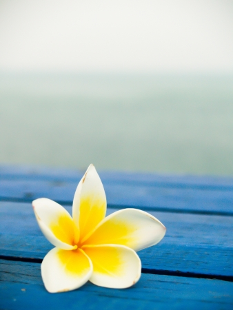 plumeria flower: Tropical flowers frangipani on wood with sea background Stock Photo