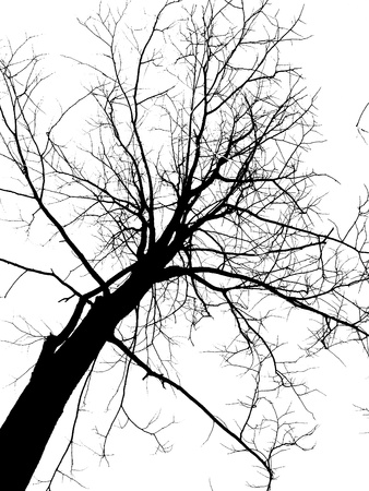 Dead tree silhouette isolated         photo