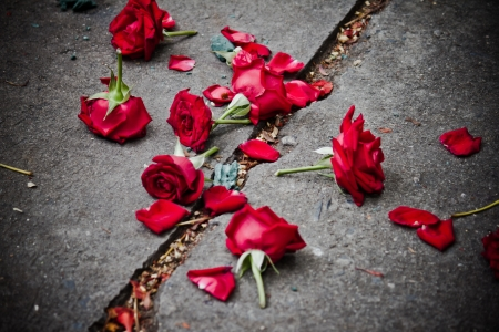 печальный: сломанные лепестки роз на грязь