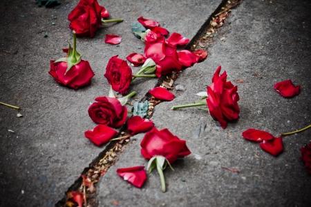 corazon roto: rota p�talos de rosa sobre la suciedad Foto de archivo