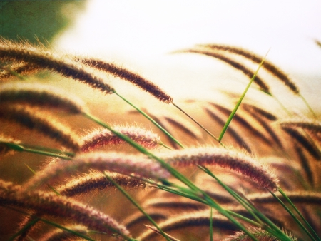 Flower grass with golden rim light in vintage style    Stock Photo