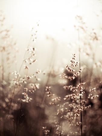 colores calidos: rojo natal hierba (someras dof fondo abstracto, colores c�lidos, el lugar para el texto) Foto de archivo