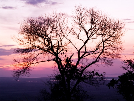 silhouette of lonely tree in  fluorescent white balance photo