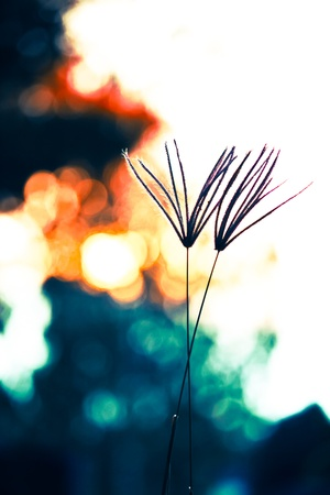 cross process: swollen finger grass in fantasy colors