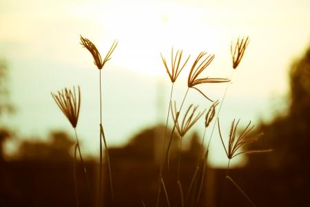 swollen finger grass in fantasy colors