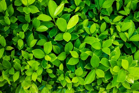 spring leaf: green leaf background