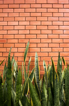 interleaved: plant and brick wall background Stock Photo