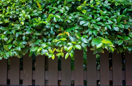 fence and tree background Stock Photo