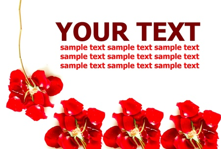 Abstract red roses isolated on white background photo