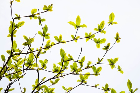young leaves spring background - fade film style photo
