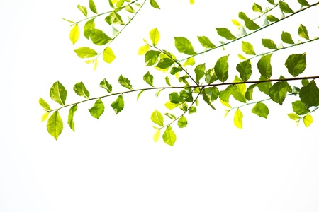 Nature background leaves Stock Photo - 17898612