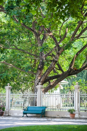 empty bench under big trees photo