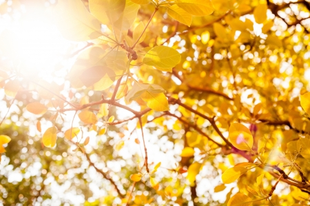 yellow leaves on white background Stock Photo - 18542359