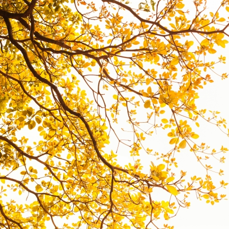 yellow leaves on white background photo