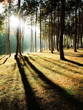 Sun rise at Pang-ung, Pine forest in Thailand  photo