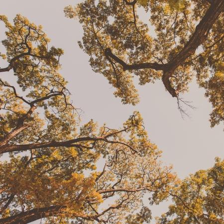 Vintage autumn trees background