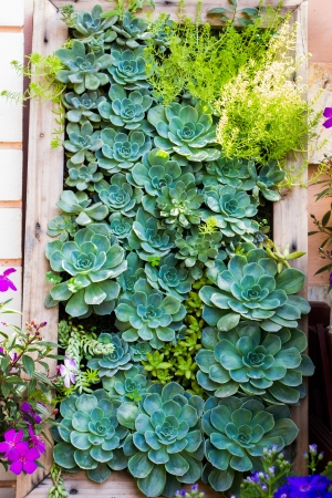 vertical garden style of Kalanchoe photo