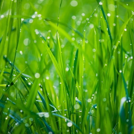 background of dew drops on bright green grass photo