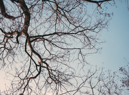 Dead tree , branches of a tree without leaves of autumn against sky