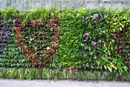 vertical tropical garden with various kind of green plants  and flowers Stock Photo