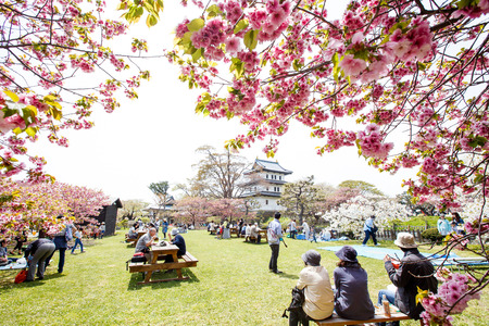 HOKKAIDO, JAPAN - MAY 3, 2015: Unidentified tourists enjoy the spring sakura cherry blossoms at Matsumae Castle which  officially recognized as one of the best cherry blossom viewing spots in Japan.