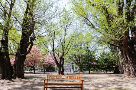 oficina antigua: SAPPORO, JAPÓN 06 de mayo 2015: El ex Oficina Hokkaid? obierno de ladrillos rojos y su jardín con Sakura o cereza Blossum floración durante la Semana Dorada de Japón 2015. Se trata de un turismo popular en Hokkaido.