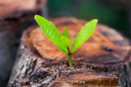 녹색 젊은 작은 나무는 나무 밑둥에서 등장 - 희망과 중생의 개념 스톡 콘텐츠