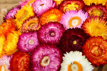Colorful Straw Flowers