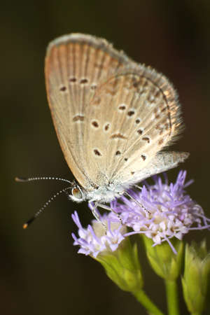 Beautiful Butterfly with The flower of grass  Stock Photo