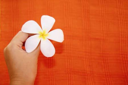 Holding frangipani background