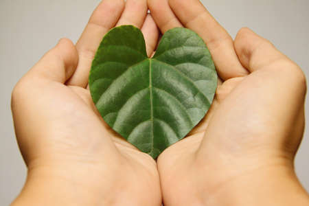 Hands holding a heart leaf symbol.Ecology concept Stock Photo - 11889826