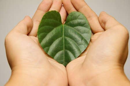 Hands holding a heart leaf symbol.Ecology concept  photo